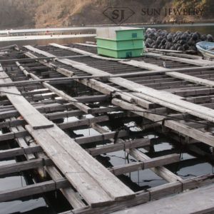 対馬 真珠養殖場